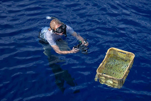 A basket that was found in the middle of the Ocean near the Pacific Garbage Patch. Photo by Jeff Ernst